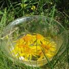arnica-2-essenza-floreale-ritagliata